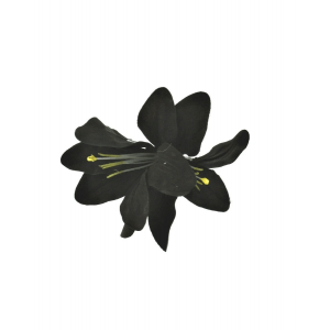 Black Lilies on Concord Clip & Brooch Pin
